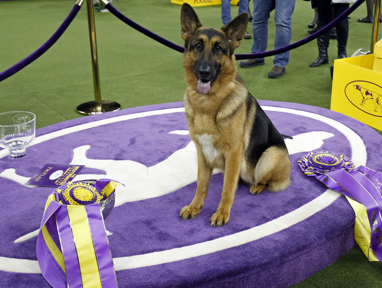 Cropped 2017 02 15t053337z 1552428438 nocid rtrmadp 3 news westminster kennel club dog show