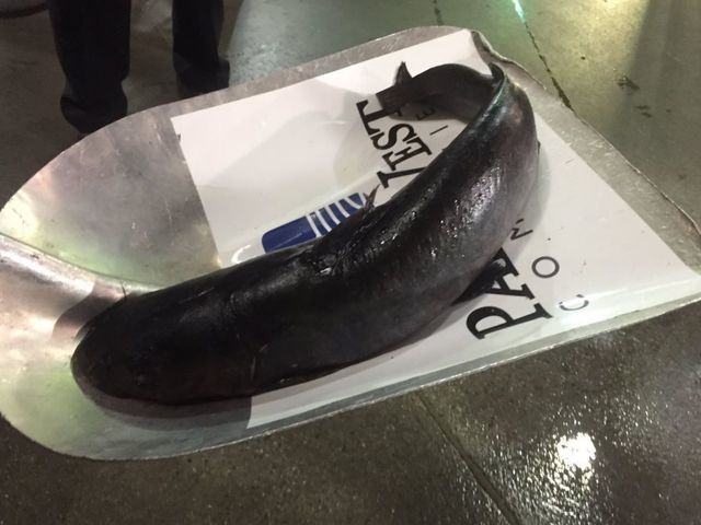 Look: Huge catfish thrown on ice prior to Game 2 between Ducks, Preds