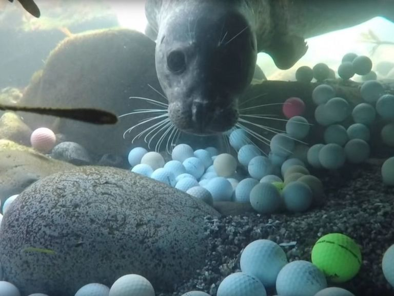 Teenage diver pulls 50,000 golf balls from ocean off Pebble Beach